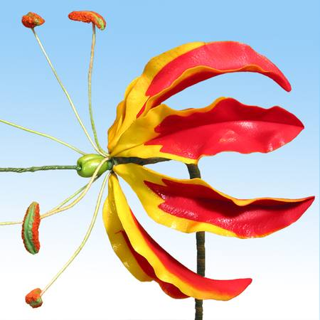 Gloriosa Lily (flame Lily) flower cutter